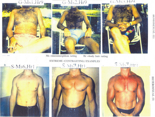 Extreme contrasts between homosexual and heterosexual men with respect to body hair and muscularity.